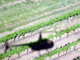 Vineyards near Adelaide, Australia