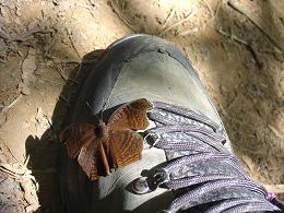 Butterfly on my Boot